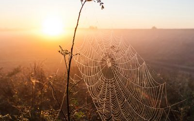 Of Spiders and God's Presence